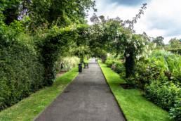 Pathway in Belfast park